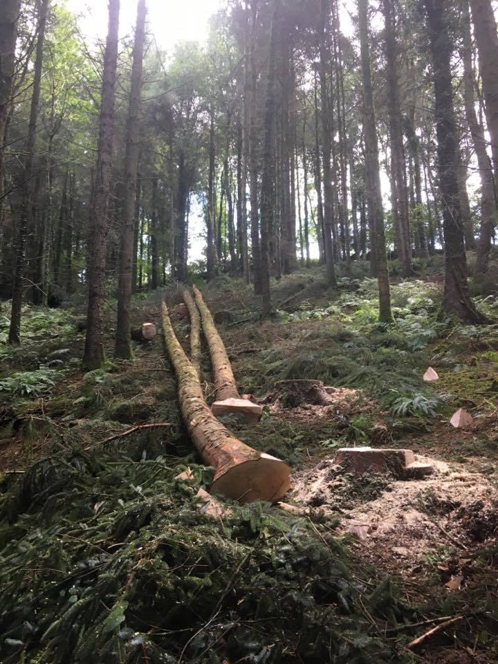 woodland management devon