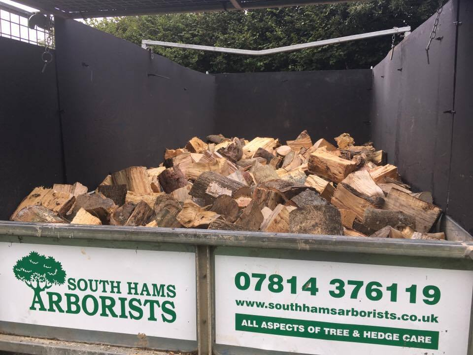 firewood logs devon