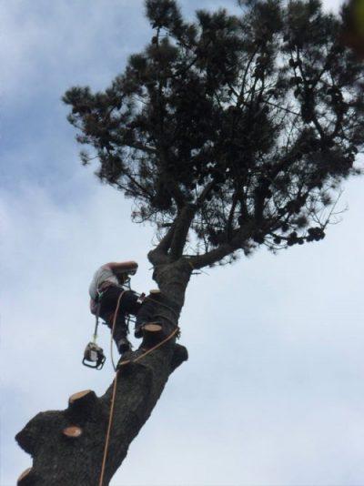 tree surgery salcombe